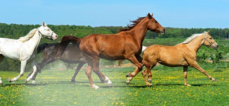 equineslidernofade2